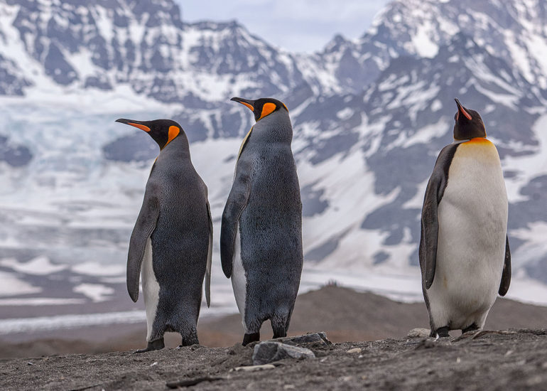 Wildlife & Photography talk about Antarctica